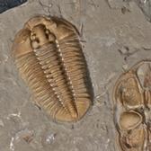 Visite du Musée de paléontologie (MPE)