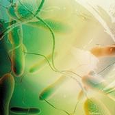 Le choléra : un fléau toujours d'actualité